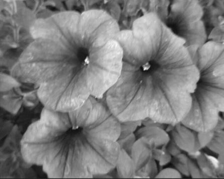 """""""June Flowers in Detroit"""""""